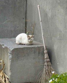 伊平屋猫2.jpg