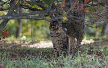 城山野良猫1.jpg