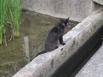 御坊猫2.jpg