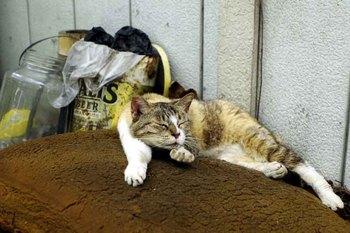 立川猫1.jpg