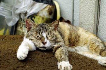 立川猫2.jpg