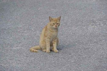 舌出し猫.jpg
