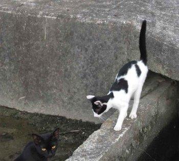 野良猫2匹.jpg
