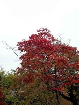 高尾公園2.jpg