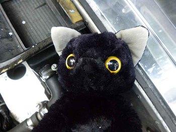 黒猫2.jpg