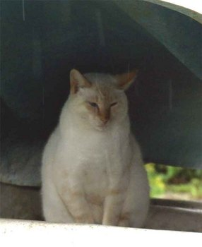 ノラ猫1.jpg