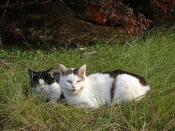 城山湖猫.jpg
