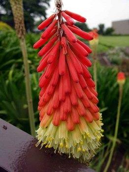 変な花.jpg