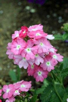 小型花.jpg