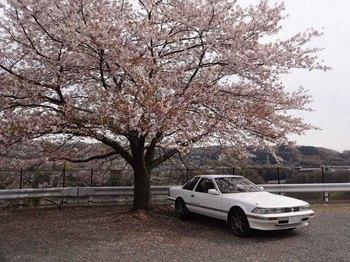 桜の下で2.jpg
