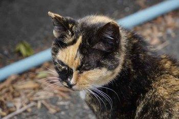 野良猫1.jpg