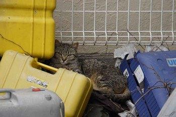 野良猫2.jpg