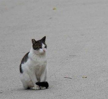 首里城猫.jpg